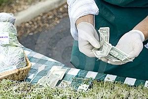 Verts Photo libre de droits - Image: 5977715
