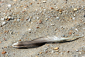 Feather On Beach Stock Photography - Image: 5979152