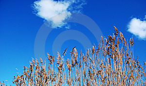 Foliage And Blue Sky Royalty Free Stock Images - Image: 5985799