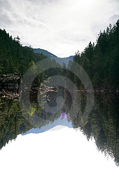 Forest Reflection No. 1 Stock Images - Image: 5987474