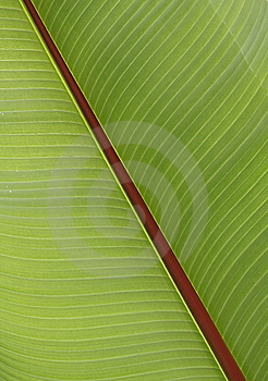 Detail Of Leaf Royalty Free Stock Photo - Image: 5989205