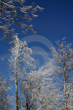Ice Covered Trees With Rainbow Free Stock Images