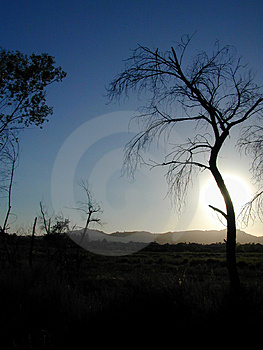 Tree Silhouette at Sunset Royalty Free Stock Photos
