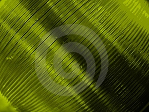 Green tinted cds Stock Image