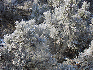 Winter Flowers Background Free Stock Photography