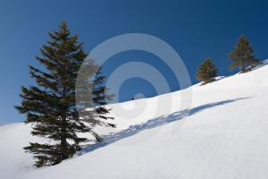 Trees And Shadows Stock Photography - Image: 600362