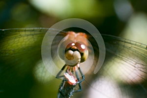 Damselfly Stock Images - Image: 606884