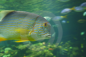 Exotic Fish Stock Image - Image: 6013031