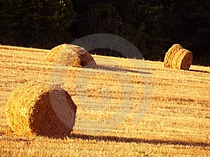 Hay's Rolls Royalty Free Stock Photography - Image: 6014037