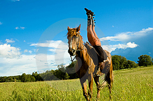 Horse Stock Images - Image: 6014914