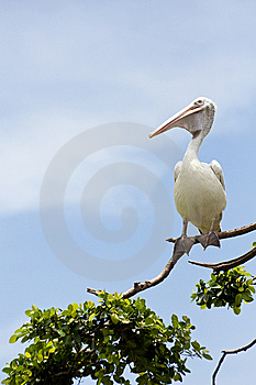 Bird On The Branch Stock Image - Image: 6019991