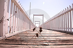 Weeds On Pier Royalty Free Stock Images - Image: 6022509