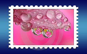 Unname Fresh Stamp Stock Photography - Image: 6041022
