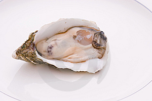 Single Oyster Royalty Free Stock Photos