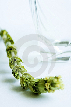 Tea Time Royalty Free Stock Images - Image: 6043539