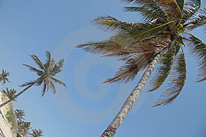 Palms On Beach Royalty Free Stock Image - Image: 6045406