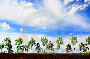 The Trees Below The Sky Royalty Free Stock Image - Image: 6046206
