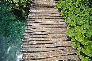 Plants, Water And Wooden Bridge Stock Photos - Image: 6064593