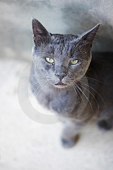 Cat Royalty Free Stock Image - Image: 6076216