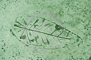 Leaf Impression In A Cement Green Sidewalk Stock Photo - Image: 6084600