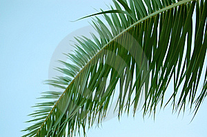 Palm Tree Leaf And Blue Sky Stock Photography - Image: 6088332