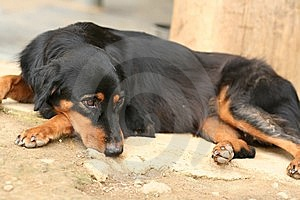 Sad Looking Domestic Dog Royalty Free Stock Image - Image: 6094006