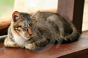 Sleeping Domestic Cat Royalty Free Stock Photography - Image: 6094097