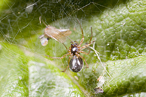 Spider With Recently Caught Fly Stock Images - Image: 6095574