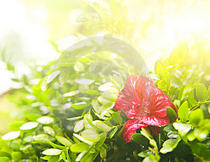 Flower At Sunny Day Stock Photo - Image: 6096080