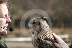Coruja De Eagle Foto de Stock Royalty Free - Imagem: 614315