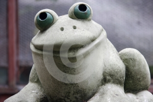 Happy Frog Royalty Free Stock Photos - Image: 616778