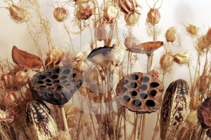 Dry Flowers Stock Images - Image: 618414