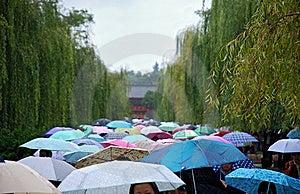 A little rain Free Stock Image