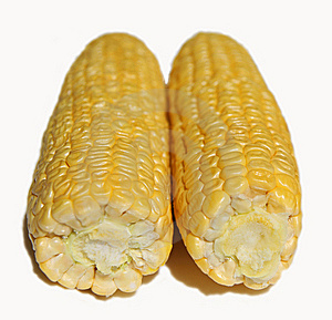 Two Corn Cob. Stock Photos - Image: 6113123