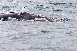 Whale Portrait Stock Image - Image: 6126921
