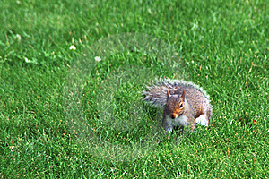 Walking Squirrel Stock Image - Image: 6127351