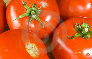 Several Fresh Tomatoes Stock Photos - Image: 6128563