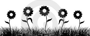 Sunflower On Field, Black Silhouette Royalty Free Stock Photography - Image: 6128937