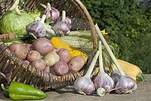 Harvest Stock Photo - Image: 6129190