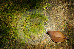 Leaf And Sunlight Royalty Free Stock Image - Image: 6134466