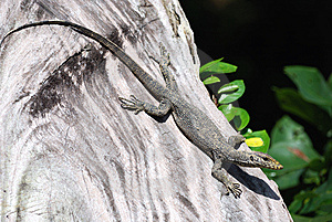 A Lizard At A Tree Royalty Free Stock Photo - Image: 6136185