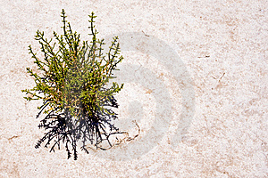 Dryness Stock Images - Image: 6142844