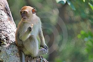 Monkey Eating Stock Photography - Image: 6147302
