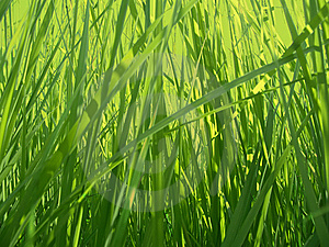 Grass background Free Stock Photo