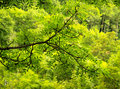 Green on Green Stock Image