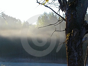 Morning Fog In The Autumn Forest Royalty Free Stock Images - Image: 6151189