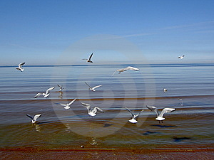 Seagulls Over The Sea. Stock Image - Image: 6153621