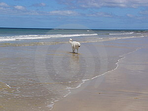 Dog By Seaside Stock Photos - Image: 6163413