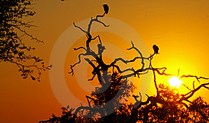 Vultures At Sunset Royalty Free Stock Photos - Image: 6165038