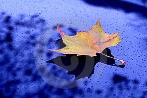 Alone Leaf Stock Image - Image: 6166811